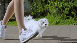 A white shaggy dog is jogging with its owner