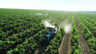 Grape plantation is being irrigated with a fertilizer