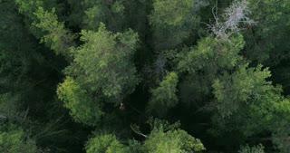 Illegal forest logging