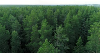 Nature of Russia, a large forest
