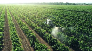 Spraying the rows of vines