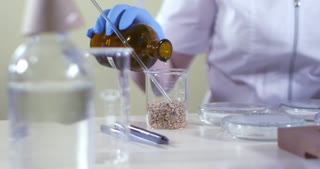 Steeping of plant seeds in alcohol at the lab