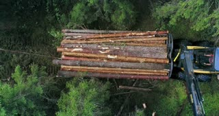 Timber collecting machine is driving through the forest