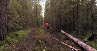 Woodcutters with chainsaws are walking through the forest leaving behind themselves cut down trees.