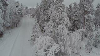 Aerial shot of a road in pine wood leading to winter recreation by the lake. Nature scene with snow covered trees
