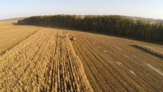 Aerial shot of farm machinery gathering corn. Combine harvester and truck working on crop field