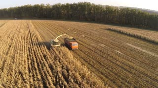 Aerial view of harvester and truck gathering corn on the field. Agriculture and growing grain crops