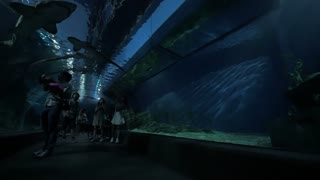 BANGKOK, THAILAND - NOVEMBER 02, 2015: Visitors in the underwater tunnel of Siam Ocean World oceanarium with following view to the shark swimming overhead