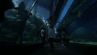 BANGKOK, THAILAND - NOVEMBER 1, 2015: In Siam Ocean World people stand at the aquarium and watching for big fish, photographing them on mobile phones. Thailand is visited by more than 26 million