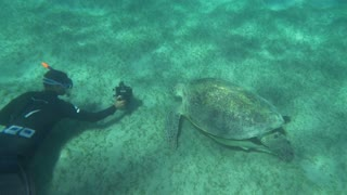 Slow motion of diver photographer shooting big sea turtle with underwater camera. Some fish hiding under its shell