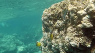 Slow motion underwater shot of a coral reef in Red Sea and tropical fishes swimming by. Shot is made in sunny day.