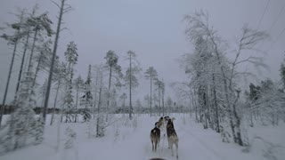 Group of husky dogs pulling sledge in winter forest. View from the moving sled. Traveling in the north, Finland