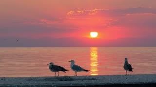 Slow motion shot of several seagulls walking on the pier on the background of quiet sea and sunset. Golden sun path on water