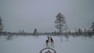Winter ride with dogsled. Team of husky dogs running in snowy wood, Finland