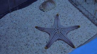 Woman hand smoothing starfish exhibited in aquarium. Touching sea animal in the oceanarium