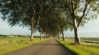 A car drives on a straight and narrow countryside road, surrounded by trees. Point-of-view footage.