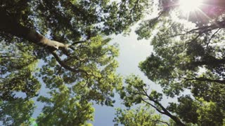 A dense green forest on a sunny day with a clear blue sky. Low angle view, tilt motion reveals the forest.