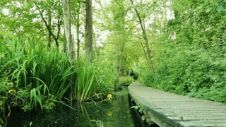 A green garden with a wooden path and a pond of water around it. Dolly move.