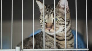 A house cat behind bars of a vet clinic cage.