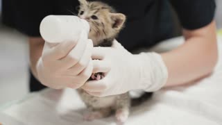 A small kitten drinks milk from a bottle with pacifier at a vet clinic.