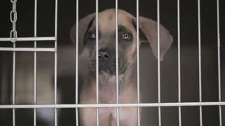 A young dog puppy behind bars of a veterinary clinic cage.