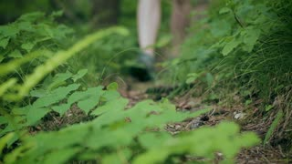 An active woman walking on a forest trail stops to tie her shoelace and then continues walking. Closeup footage.