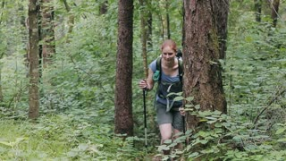 An active young woman climbs up a walking path in a green forest using walking sticks. Static footage.