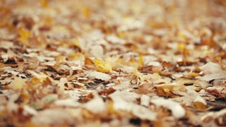 Dolly macro footage of a park alley in the autumn - fallen yellow and orange tree leaves.