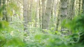 Footage of a dense green forest with trees and bushes. Dolly move from right to left.