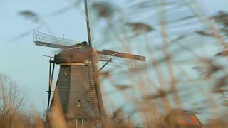 Historic windmill at Kinderdijk, the Netherlands behind talk grass.