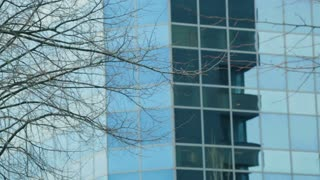 Static footage of a bare tree branch before a corporate office building with a glass facade.