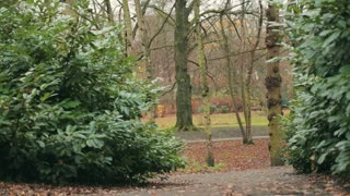 Static footage of a city park by autumn. Shallow DOF, focus on the trees in the distance.