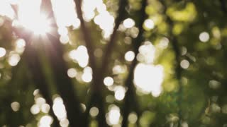 Sunlight shines through branches in a green forest. Abstract out of focus background footage with native lens flare.