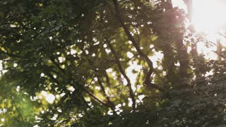 Sunrise or sunset light shines through forest tree branches. Panning footage with lens flare.
