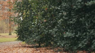 Young woman walking through a city park in the fall. Tracking footage.