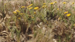 Slow motion dolly shot of family walking through flower meadow in countryside.