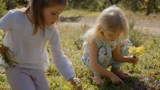 Two children picking wild flowers