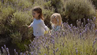 Two children walking through lavender flowers