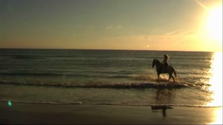 Woman on horse at seashore, walking in sea