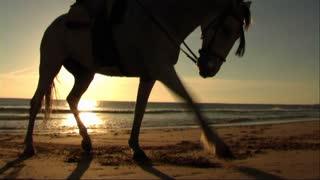 Woman on horse at seashore