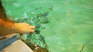 a girl feeding a stingray at an aquarium 4k
