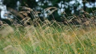 blowing grass in an open field