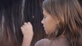 brushing the horse closeup