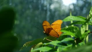 butterfly purched on a leaf