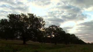 crane from tree to sky