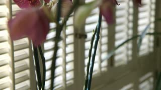 crane up to orchid next to a window