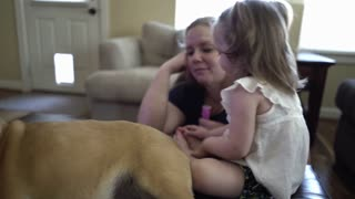cute playful toddler playing on the family dog in their living room 4k