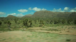driving through  Joshua Tree forest