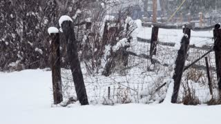 fence view of blizzard