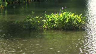 flowers growing on the bank of a lake